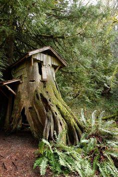 森林 树屋@苍默君采集到树(287图)_花瓣 Trail, Outdoor Decor, Plants, Garden, House, Cabin, Garten, Haus, Planters