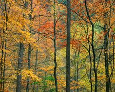 Don't you love to see the different colors of fall in the Smokies?