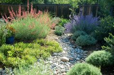 dry riverbed landscaping