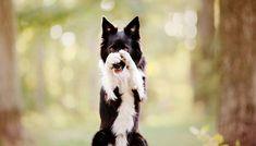 dog training,dog hacks,smart dog,teach your dog,dog learning Cool Dog Tricks, Tricks For Dogs, Dog Hacks, Training Your Dog, Training Tips, Training Online, Agility Training, Dog Agility, Training Equipment