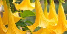 Paradise - Stratovarius