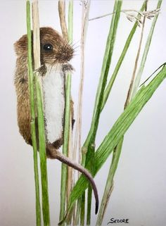 Brenda Sedore's Harvest Mouse interpretation caught my eye as December's 'Painting of the month' in my online School. She's done a great job getting the textures right and really captured the mouse' character!