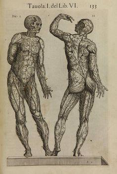 "Las arterias según Juan Valverde de Amusco: ""Anatomia del Cuerpo Humano"" (Roma, 1559 https://pinterest.com/pin/287386019947532848). Enlarge: https://pinterest.com/pin/287386019947532852/"