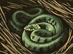 Chris Wormell's enchanting hibernating animal series for the Royal Mail - The Artworks Animals That Hibernate, Reptiles And Amphibians, Linocut Prints, Royal Mail, Three Dimensional, Printmaking, Hibernating Animals, Artworks, Drawings