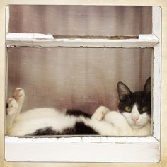 Coastal Cottage | black and white cat in window