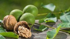 Vlašské ořechy Dilema, Samos, Tahini, Feta, Garlic, Fruit, Vegetables, Gardening, France