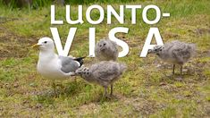 luontovisa Closer To Nature, Picture Video, Science, Bird, Pictures, Animals, Education, Photos, Animaux
