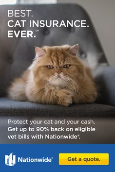 Get up to back on eligible vet bills with Nationwide. Cute Baby Animals, Animals And Pets, Funny Animals, I Love Cats, Cute Cats, Funny Cats, Crazy Cat Lady, Crazy Cats, Beautiful Cats
