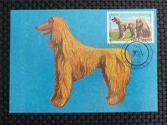 ROMANIA MK HUNDE DOGS GREYHOUND WINDHUND MAXIMUMKARTE MAXIMUM CARD MC CM c924