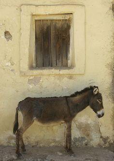 Donkey In Senafe Market, Eritrea by Eric Lafforgue, via Flickr