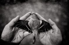 Songless Photo by Tytia Habing -- National Geographic Your Shot Amazing Photography, Art Photography, Great Photographers, National Geographic Photos, Great Pictures, Black And White Photography, Photo Editor, Wildlife, Fine Art