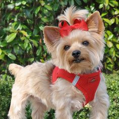 Ultra Choke Free Dog Harness - Red