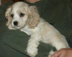 Dog Day Care Torrington Ct
