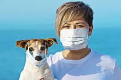 Can dogs and cats get coronavirus? What is canine and feline coronavirus? Or even the advanced form in cats, FIP? Read about its symptoms and modes of transmission. Ways To Reduce Anxiety, Ways To Relieve Stress, Making A Vision Board, Best Supplements, Eat Right, What You Can Do, Stress And Anxiety, Diy For Kids, Muscles
