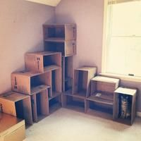 39 Best Cardboard Cat House Images Cardboard Cat House Cat Cave