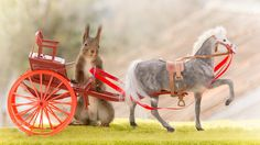 close up of red squirrel climbing  in a horse carriage
