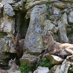 Zoo Bois du Petit Chateau  Free activity / Activité gratuite / Kostenlose Aktivität    @ La Chaux-de-Fonds Grand Hotel, Place, Free, Animals, Whitewash, Woodwind Instrument, Animales, Animaux, Animal Memes