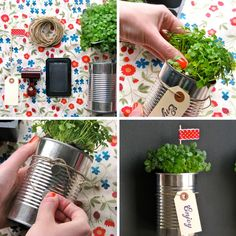Tin Can Strawberry Plant ~ used as center pieces at a garden party.  then replanted the strawberries.  loved the look.