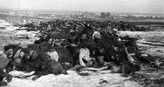 Piles of dead German bodies outside of Stalingrad, Feburary 1943