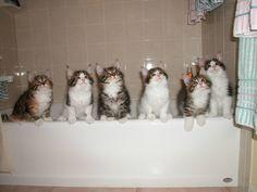 Bathtub full of kittens