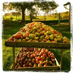 Hana, Apple, Fruit, Food, Apple Fruit, Essen, Meals, Yemek, Apples