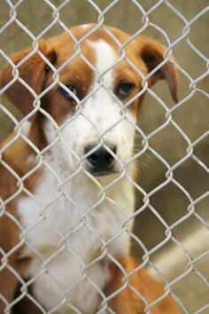 NOBODY is interested in me, and I´m on DEATH ROW in a HIGH KILL Shelter in ODESSA, Texas. Can YOU give me a forever home please? https://www.facebook.com/speakingupforthosewhocant/photos/pb.248355401855372.-2207520000.1395951777./749445458413028/?type=3&theater