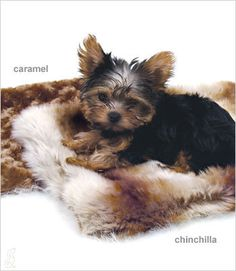 Carrier Blanket: So Soft My Dogs love it!