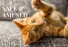 Pet Vaccinations To Keep Your Pet Healthy – Animal Health Info Pet Vet, Pet Dogs, Feral Kittens, Pet Corner, Kitten Care, Outdoor Cats, Cat Facts, Pet Health, Pets