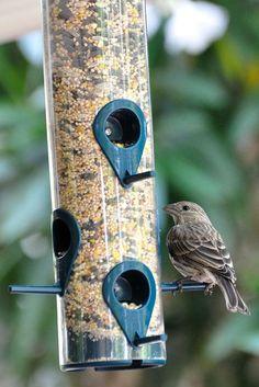 Αποτέλεσμα εικόνας για Bird Feeder