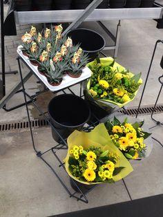 Presentatie van bloemen en planten. Presentation of flowers and plants.