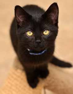 Black cats are the best.