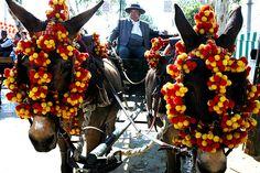 Horses: Pom poms