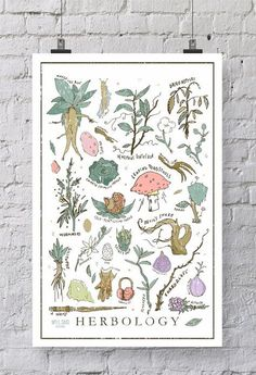Movie Treasures By Brenda: Harry Potter Herbology Print - If you need extra help with your Hogwarts studies you will find this print helpful.