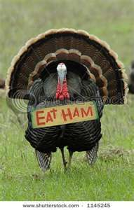 Turkey Cute! Sorry turkey! No ham for me on Thanksgiving! My family would shoot me!