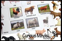 Montessori Farm Animal Object Match - Matching miniature farm animals to photo card.  Montessori 3 part activity.