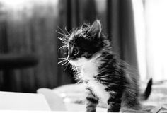 black and white animal photography | adorable, animal, black and white, cat, cute - image #255131 on Favim ...