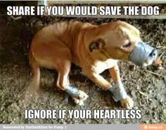 Heart or heartless