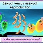 ASEXUAL VERSUS SEXUAL REPRODUCTION is a great magnificent  interactive  PPT dedicated to clarify the main  differences between  asexual and sexual ...