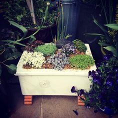 Mini Belfast sink alpine garden - All About Gardens Rockery Garden, Bog Garden, Garden Planters, Indoor Garden, Belfast Sink Garden Planter, Garden Sink, Back Gardens, Small Gardens, Butler Sink