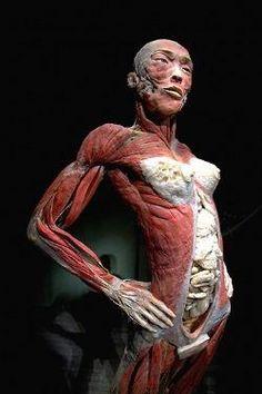 http://de10.com.mx/img/promos/cuerpo-humano-10.jpg