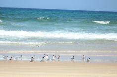 Sandy Cape - Fraser Island - QLD Australia