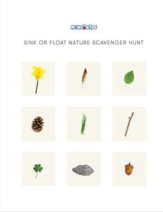 Sink or Float Activity for Toddlers Sink Or Float, Investigations, Montessori, Plants, Printable, Kids, Young Children, Boys, Study