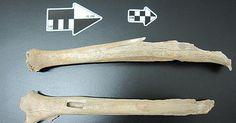 Asiáticos e índios vêm de grupo chinês de 40 mil anos, mostra DNA