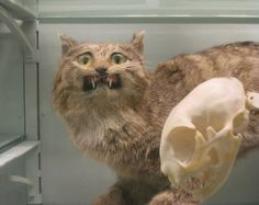30 Bad Taxidermy Pictures That Are Equal Parts Terrifying And Hilarious Funny Taxidermy, Taxidermy Bat, Taxidermy Jewelry, Taxidermy Decor, Taxidermy Display, Butterfly Taxidermy, Crochet Taxidermy, Vladimir Kush, Live Animals