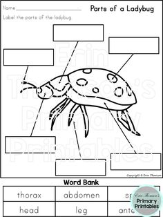 Label the parts of a ladybug. Packet includes 15 bugs for labeling. Elementary Science, Teaching Science, Science Activities, Science Projects, Elementary Schools, Teaching Resources, Bug Parts, Second Grade Science, Interesting Topics