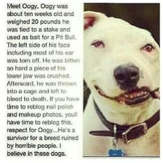 God bless Oogy n all the other poor defenceless animals that fall into the hands of the devil. Those people should have the same done to them as these poor souls do. And its amazing how much they still love n thts all they want in return. Is tht so much to ask just to Love. Thank you to the awesome person tht saved Oogys life n hope many more will find their way to forever happy loving homes! Saving their lives is a must all dogs all animals all breeds we r their voices!♥.
