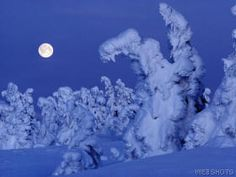 snow covered trees at night