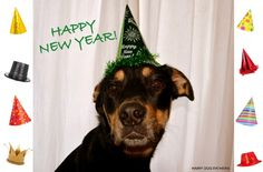 To start off 2015 off on the right paw, the Hairy Dogfathers want to share their own New Year's Resolutions