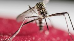 CDC to Host Zika Conference Call with Hospital Workers Zika Fever, Virus Del Zika, Types Of Ticks, Brain Tumor, University Of Washington, Trends, Mosquitoes, Pianos