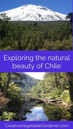 Chile is a country filled with beautiful national parks and reserves. Here are my highlights of our favorite sights and experiences while there.